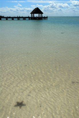 Estrella de mar, Holbox.