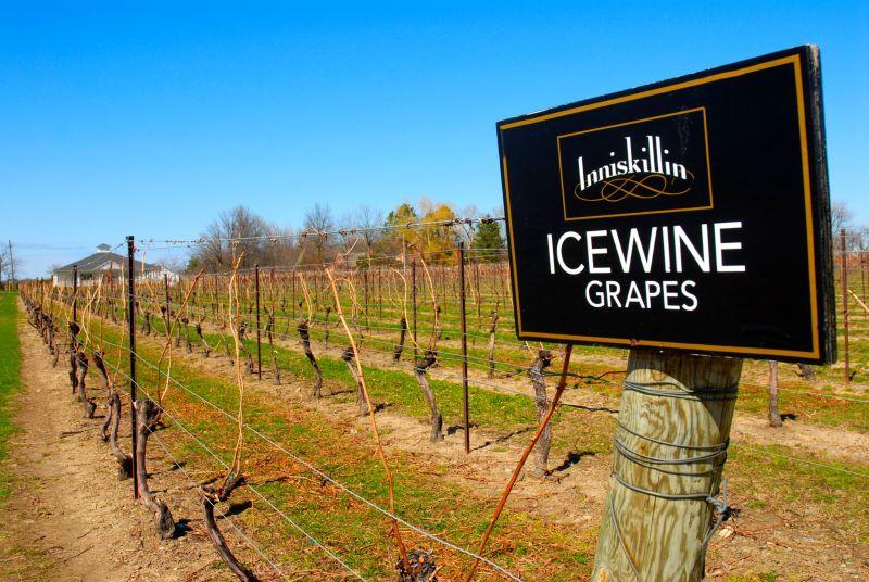 Inniskillin Winery, especializada en los famosos vinos de hielo.